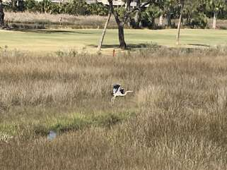 Watch egret and herons fishing in the marsh and majestically taking flight.