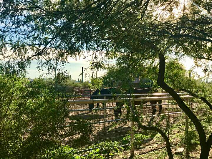 Two horses through the fence that borders the property