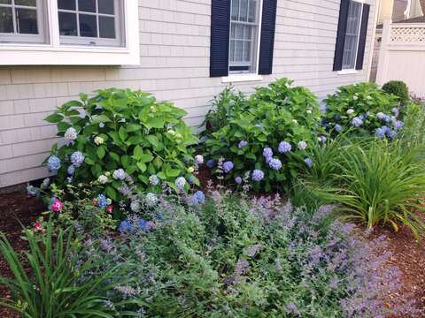 Beautiful gardens and professional landscaped yard-161 Bay Lane Centerville Cape Cod - New England Vacation Rentals