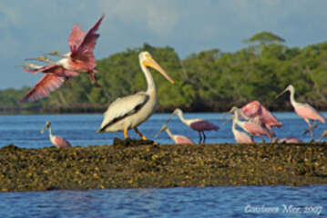 take a day trip to our beautiful Everglades National Parks