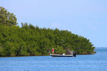 Mangrove Fishing