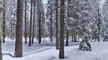Peaceful & Private Winter Wooded Views