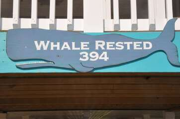 394W - WHALE RESTED | Photo