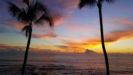 Sunset views of the ocean and palms