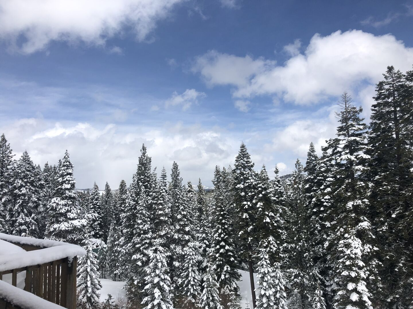 Snowy trees around this North Lake Tahoe vacation rental.