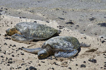 Turtles at nearby beach
