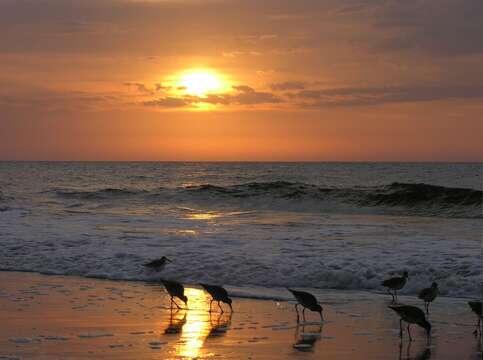 Seagulls on Beach at Sunset.