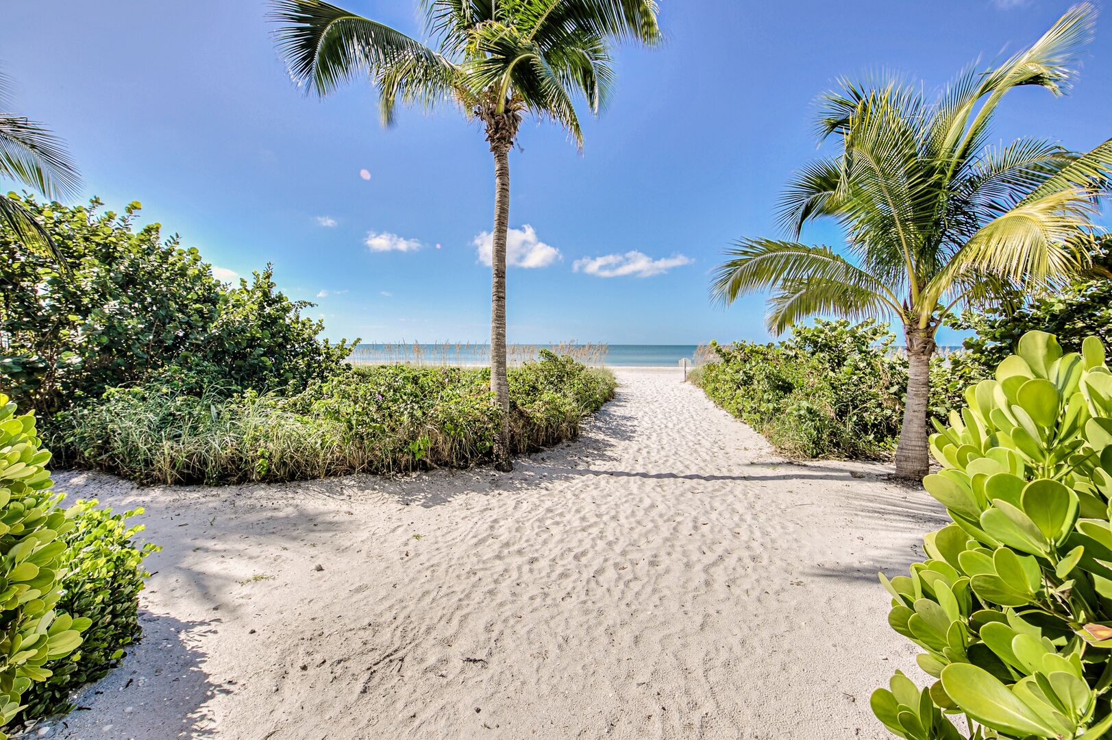 Beautiful Sandy Path to the Beach with Palm Trees.