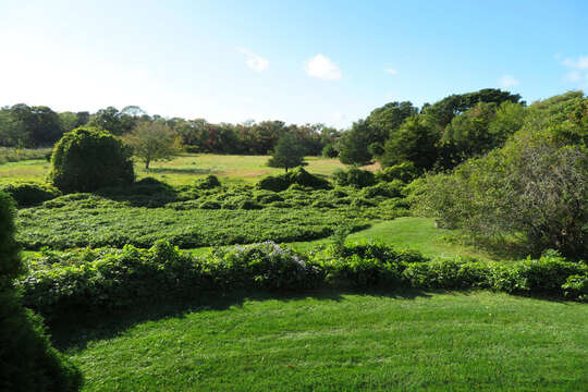 Over looks acres of conservation land! 60 Sisson Road Harwich Port Cape Cod New England Vacation Rentals