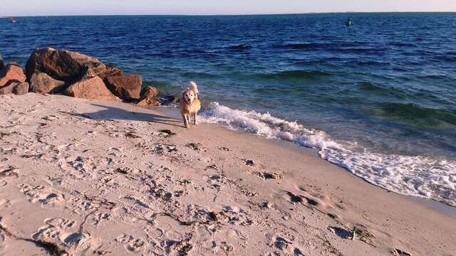 There is a pet friendly walk thru the dunes at the end of Hardings Beach that you can bring your fur baby on - remember to leave nothing behind but your footprints! Chatham Cape Cod - New England Vacation Rentals