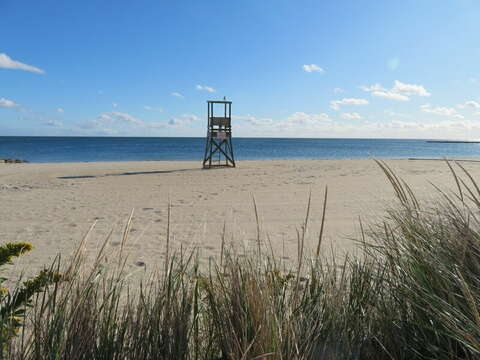 Enjoy all of Harwich...the beaches!-Harwich Cape Cod - New England Vacation Rentals