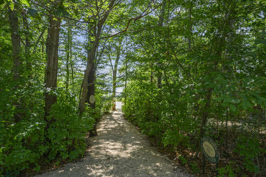 Access to resident beach down the street - 46 Holly Point Road Centerville Cape Cod