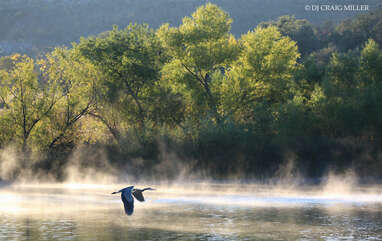 Wildlife enthusiasts will be thrilled with glimpses of migrating birds, water fowl, elk and other wildlife common to the central mountain region of Arizona.