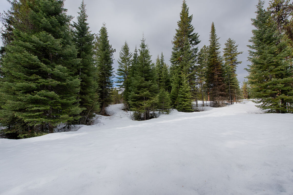 Open space and pine trees surround the property