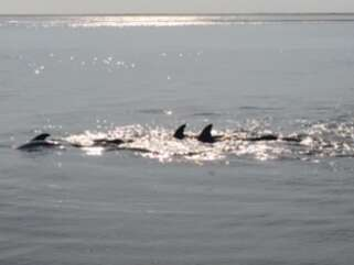 Dolphins are frequent visitors