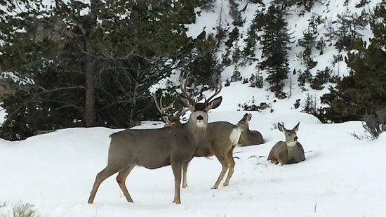 White tails near the property