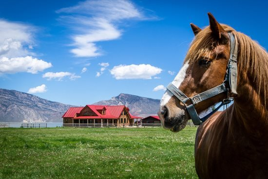 Welcome to Red Roof Ranch-horse not included