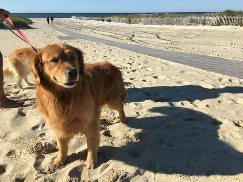 Pup friendly beaches - Hyannis - Cape Cod - New England Vacation Rentals