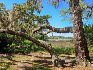 Live oaks front and back - feels like you're in a tree house!