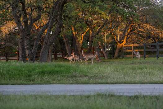 Frequent wildlife sitings on the property