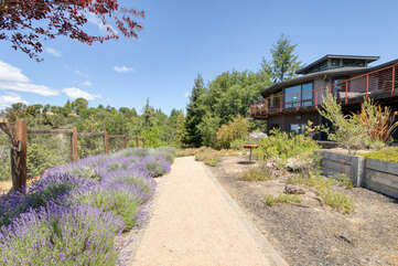 Take in nature — lavendar bushes and the California oak woodlands